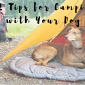 12 Essential Tips Camping Dog
